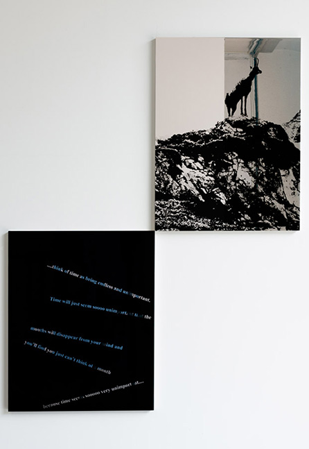 Euan Macdonald, Untitled, 2015, enamel on aluminum, cm. 61 x 81 (each)